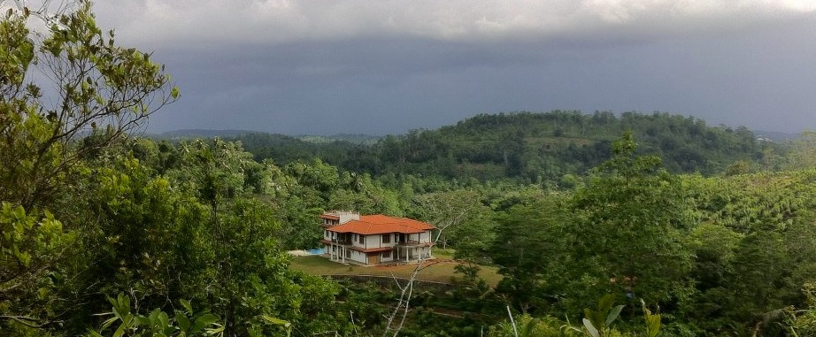 niyagama-plantation
